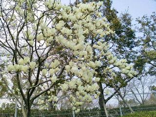 春の息吹き