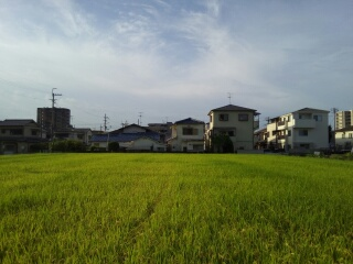 今朝の空16094