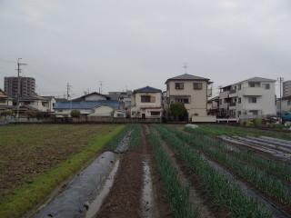 150329_kesasora_2